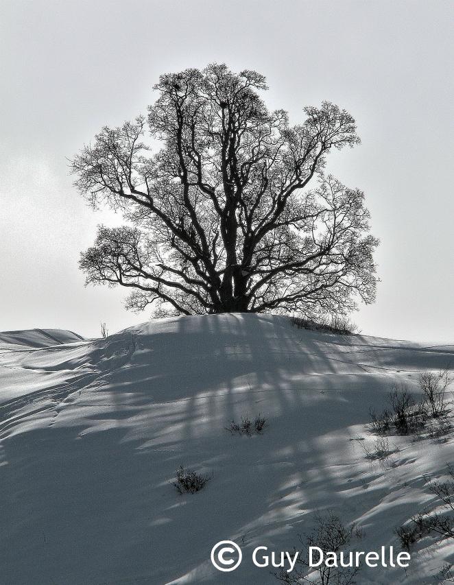 albiez-arbre-enneige
